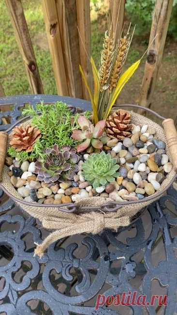 Fall Succulent Basket 🍂🧺