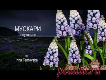 DIY Muscari promo // Ростовой мускари