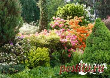 Лучшие многолетние кустарники для садового участка | Огород Мечты | Яндекс Дзен