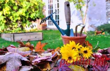 Благоприятные и неблагоприятные дни для различных работ по уходу за разными культурами в ноябре 2021 года - В Саду - дача, сад, огород. Лунный календарь садовода. Советы дачнику
