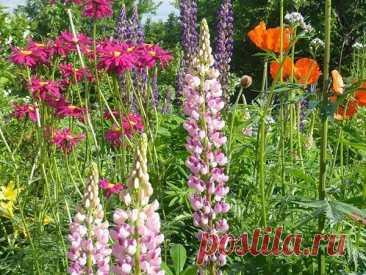 ТОП 30 неприхотливых долгоцветущих многолетников цветов для сада Поддержать красоту дачного участка с весны до осени поможет ТОП 30 долгоцветущих многолетников для дачи и сада, неприхотливых цветов, отзывающихся на минимальный уход.
