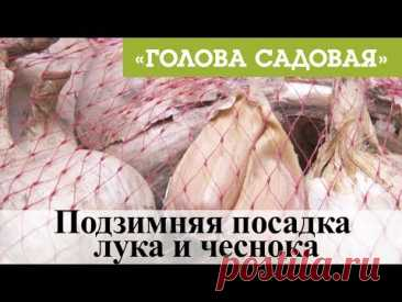 Blockhead - Subwinter landing of onions and garlic