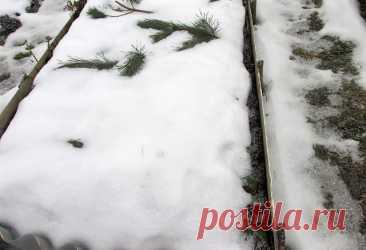 Что можно сажать под зиму на огороде?