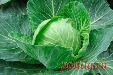 Топ-10 продуктов с высоким содержанием кальция
