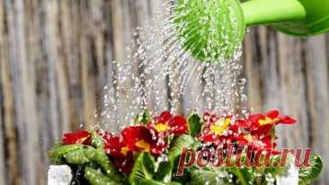 Какой водой поливать комнатные цветы? Для растений вода — это источник жизни и здорового роста. Потребность растений в воде зависит от строения стеблей, листьев, корневой системы. Например, кактусы могут обходиться без влаги очень долгое ...