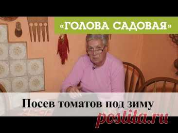 Голова садовая - Посев томатов под зиму