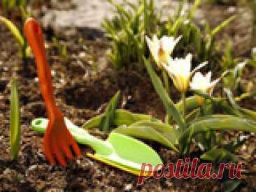 Не забудьте это сделать весной Долгожданные хлопоты на садовом участке радуют нас и приносят пользу растениям. В апреле-мае нужно сделать несколько важных дел, от которых зависит урожайность и красота цветников.