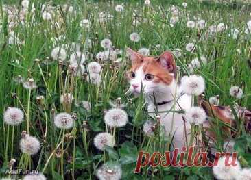 Кошки: домашние и дикие – Блог. Run, пользователь Марина Николаева | Группы Мой Мир