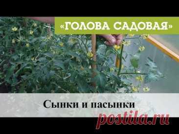 Голова Садовая - Сынки и пасынки