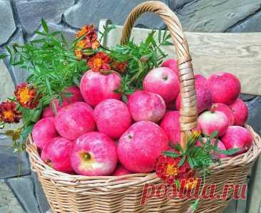 ღНа пороге яблочный август