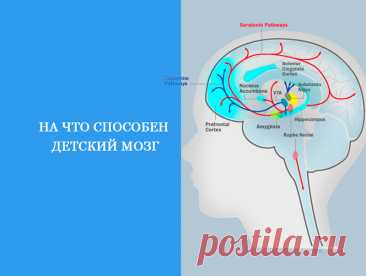 На что способен детский мозг