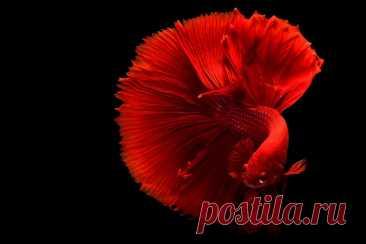 Красная рыба к чему снится во сне