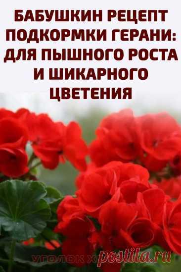 Чтобы растение было здоровым и прекрасно выглядело, необходимо правильно ухаживать за ним. Конечно же, свет, полив, своевременная обрезка очень важны. Но, наверное, главным фактором идеального внешнего вида цветка является, подталкивающая к росту и цветению, подкормка. Причем речь идет не о покупных составах, а о «бабушкином» рецепте, который кто-то помнит, а кто-то не знал или уже забыл. #герань #подкормкарастений #комнатныерастения