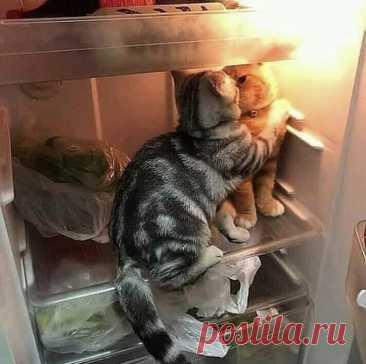 Кошка — это маленький босс