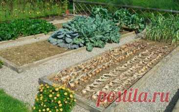 Календарь садово-огородных работ на август — Ботаничка.ru