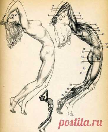 Психосоматика заболеваний суставов - Образованная Сова