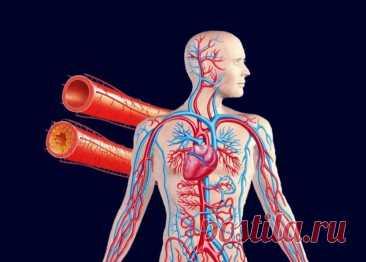 Чистка сосудов домашними средствами Многие люди с возрастом начинают испытывать неприятное ощущение, когда по ночам немеют пальцы рук и ног. Зачастую эти признаки свидетельствуют о развитии атеросклероза кровеносных сосудов.Атеросклероз...