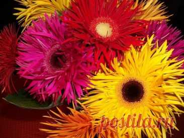 Gerbera: what needs to be known for high-quality leaving in house conditions How to make the room bright, attractive, fashionable and modern? Designers have an unusual decision — an exotic gerbera. Large, monophonic flowers with absolutely pure color allow to create at...