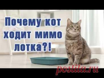 Почему котенок ходит мимо лотка?! Пять причин того, почему кошка не ходит в лоток.