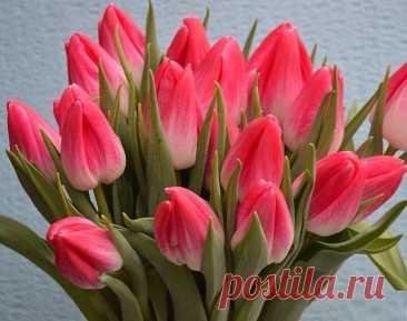 Согласно легенде, на дне тюльпана спрятано счастье...  Всем счастья и пусть в ваших сердцах всегда живет любовь!