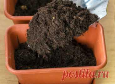 Как подготовить землю для рассады помидор в домашних условиях