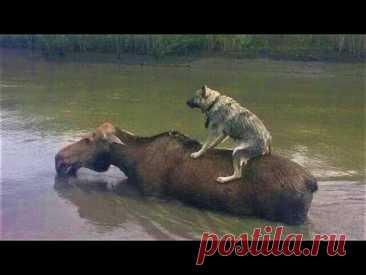 Животные спасают друг друга. Удивительные случаи взаимопомощи между животными