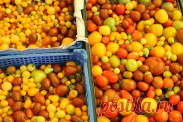 Как сохранить последние помидоры, если обещают похолодание   Есть время под солнцем   Яндекс Дзен