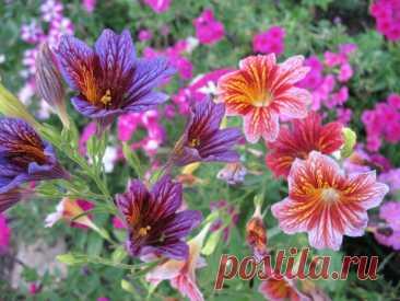 9 цветов, которые высевают в последний месяц зимы Некоторые культуры сеять на рассаду необходимо уже в феврале. Это требуется растениям... Читай дальше на сайте. Жми подробнее ➡
