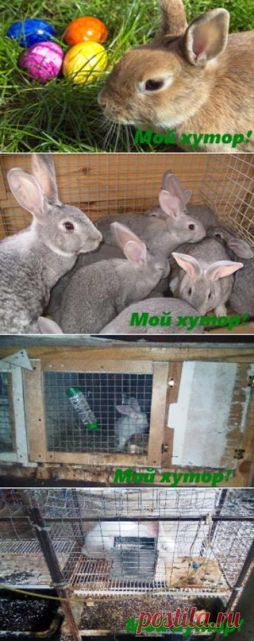 Кролиководство в приусадебном хозяйстве — Мой хутор!
