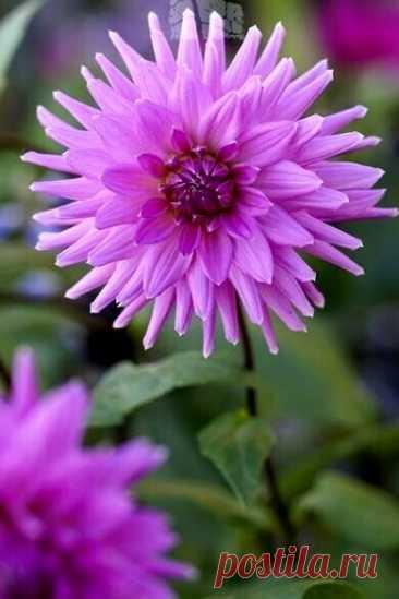 И в добром утре Вам добра, И в новом дне Вам вдохновения! Удачи, счастья и тепла, И радостного настроения!!!