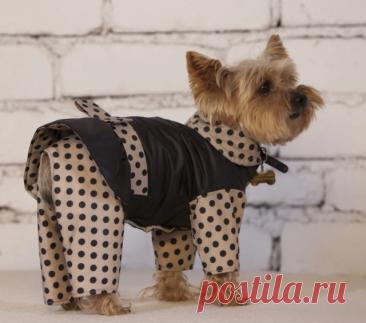 Выкройка комбинезона для собаки удобный покрой для девочки и мальчика, как сшить комбинезон для собаки, одежда для маленьких собак