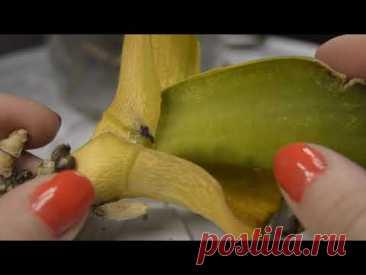 Реанимация орхидеи. Срочная помощь орхидеи без точки роста. Лечение орхидеи без листьев во мхе.