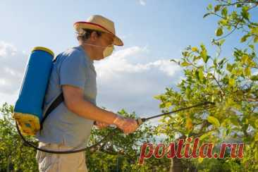 Summer diseases of berry-pickers and fruit crops