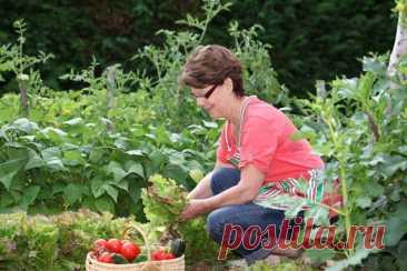 Los trabajos estacionales en el jardín y la huerta: el fin del julio - el comienzo del agosto