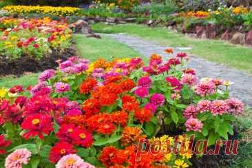 Какие посадить цветы, чтобы клумбы были яркими, безумно красивыми до самых заморозков | САД | Яндекс Дзен