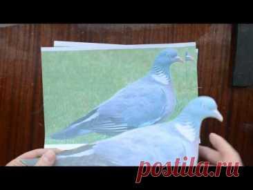 Как зделать профиль  голубя