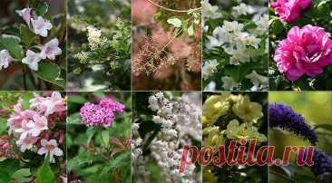 10 самых красивых кустарников, цветущих летом на Supersadovnik.ru