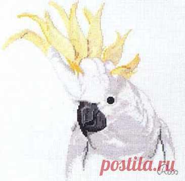 Попугаи какаду Попугаи какадуПопугаи какаду отличаются красотой и грацией.Поэтому выбор пал именно на них.