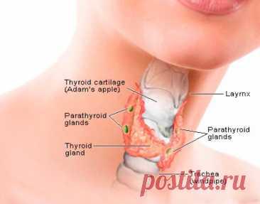 Влияние гормонов на здоровье женщины Щитовидная железа вырабатывает множество гормонов, необходимых нашему организму для полноценной работы. Они запускают обменные процессы, пищеварение, формируют иммунитет и контролируют репродуктивную систему.