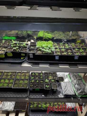 В какие сроки огородники начнут сеять перцы, баклажаны и томаты в 2021 году. | Огородник из Рязани | Яндекс Дзен