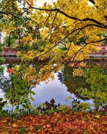 Южный парк в К...настолько обширен и столько красоты в нём, что хочется делиться и делиться этим чудом золотой осени...