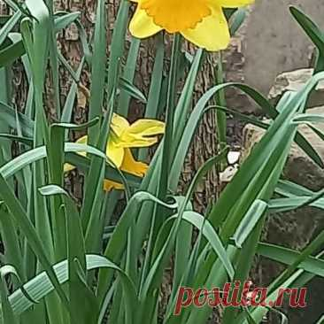 Photo by Дим on April 04, 2021. May be an image of flower and nature.