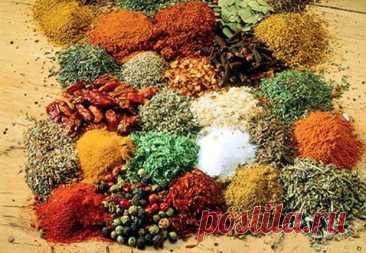 Полезные пряности индийской кухни - Народная медицина - медиаплатформа МирТесен В индийской кухне используется множество разнообразных пряностей. Это обуславливается не только особенностями индийской кулинарии вообще, но имеет более глубокий смысл. Почти все приправы и пряности, употребляемые в умеренных количествах, полезны для здоровья и способствуют излечению многих