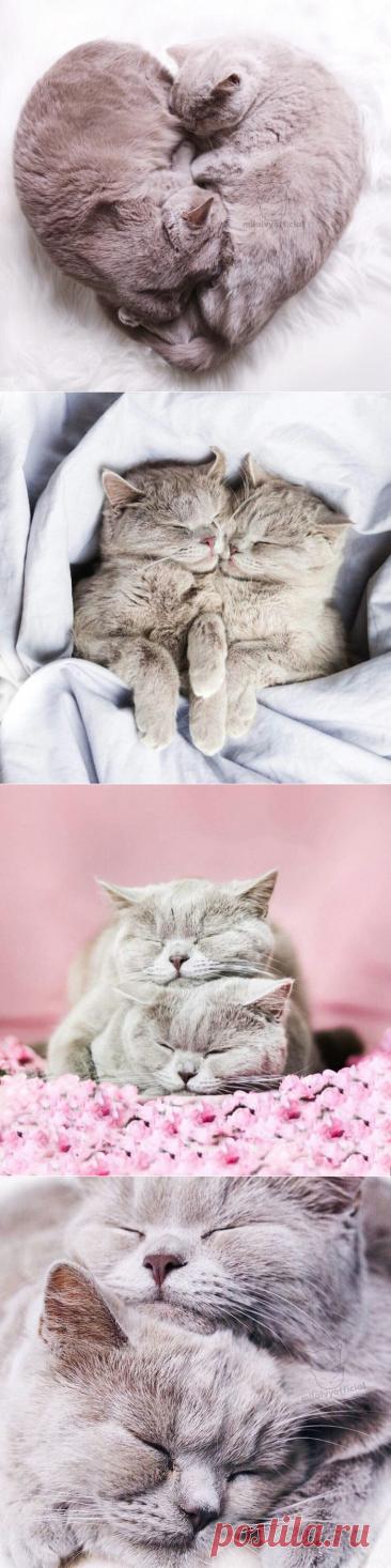 Спящие котики - это такая милота