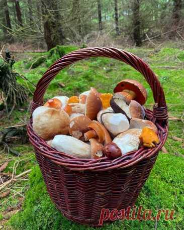ღКорзинка с лесными дарами...