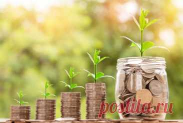 Какие растения считаются денежными талисманами и куда их поставить чтобы привлечь благополучие
