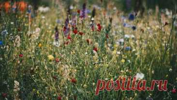 Выбираем самые неприхотливые цветы для дачи: 23 подходящих вида Рассказываем о многолетних, однолетних и двухлетних цветах, которые не потребуют много вашего времени для ухода, но сделают участок красивым. Неприхотливых цветов для дачи великое множество. Достаточно выбрать всего несколько сортов с разными сроками цветения, чтобы на участке всегда было красиво. Всегда – это не преувеличение. Некоторые растения радуют своим появлением ранней весной, другие – поздней осенью. ...