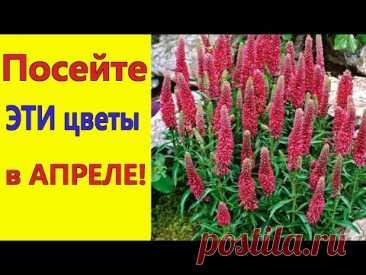 Что посеять в апреле 2021/ Посейте эти цветы в апреле, они порадуют обильным цветением в саду.