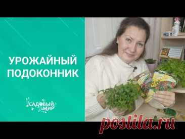ТОП-3 овощей для выращивания на подоконнике:  томаты, перец и зелень (кориандр, горчица и салат)