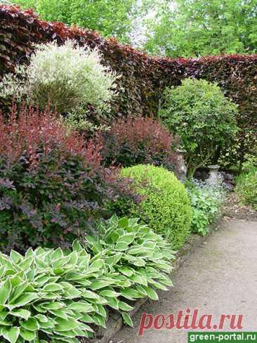 Черный сад: эксперименты с цветом - Ландшафтный дизайн своими руками